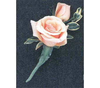 Garden Rose Boutonniere prom boutonnieres delivery coplay pa - the garden of eden