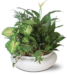 Green Garden Bowl in Hudson, New Port Richey, Spring Hill FL, Tides 'Most Excellent' Flowers