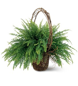 Faithful Fern in Topeka KS, Stanley Flowers, Inc.