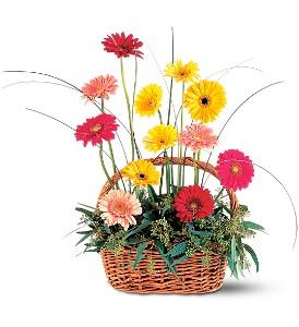 Uplifting Gerbera Basket in Indianapolis IN, Gillespie Florists