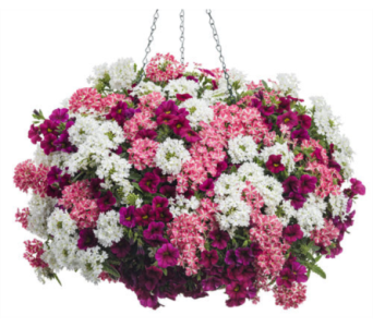Hanging Baskets in Homer NY, Arnold's Florist & Greenhouses & Gifts