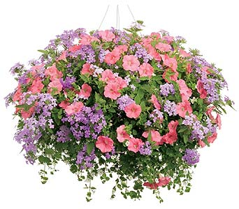 Mixed Hanging Basket in Big Rapids, Cadillac, Reed City and Canadian Lakes MI, Patterson's Flowers, Inc.