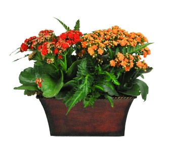 INDOOR FLOWERING PLANTS BLOOMING PLANTS EUROPEAN DISH GARDENS