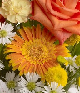 Designer's Choice Get Well Arrangement in Burlington NJ, Stein Your Florist