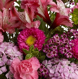 Designer's Choice Mother's Day in Burlington NJ, Stein Your Florist