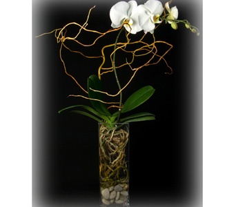 Orchid Willow in New York NY, Starbright Floral Design