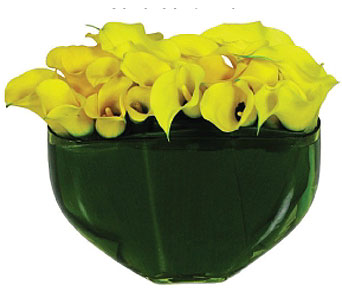Calla Sunshine in New York NY, Fellan Florists Floral Galleria