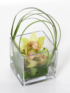 ORCHID MINI CUBE in Longmont CO, Longmont Florist, Inc.