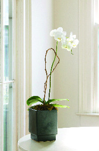 ORCHID IN DECORATIVE POT in Longmont CO, Longmont Florist, Inc.