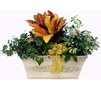Luxury Collection Combination Foliage Garden in Norristown PA, Plaza Flowers