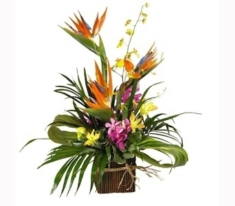 Tropical Island in Stuart FL, Harbour Bay Florist
