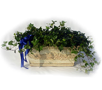Luxury Collection English Ivy in Norristown PA, Plaza Flowers
