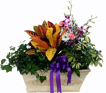 Luxury Collection - Plants & Flowers in Norristown PA, Plaza Flowers