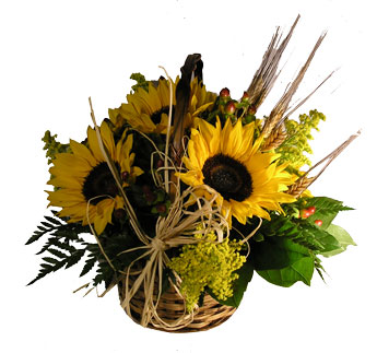 Basking in Sunflowers in Newport News VA, Pollards Florist