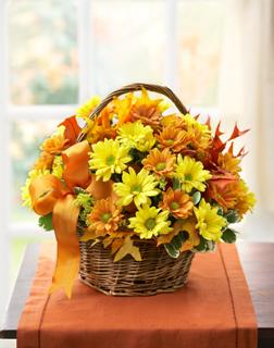 FALL DAISY BASKET in El Cajon CA, Conroy's