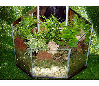 Terrarium in Laurel MD, Rainbow Florist & Delectables, Inc.