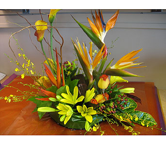 Hot & Tropical - A la Carte in Tampa FL, Buds, Blooms & Beyond