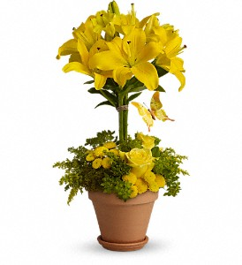 Yellow Fellow in Austintown OH, Crystal Vase Florist