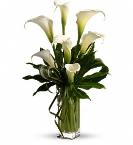 My Fair Lady by Teleflora in Amherst NY, The Trillium's Courtyard Florist