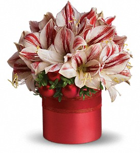 Teleflora's Peppermint Amaryllis in Mayfield Heights OH, Mayfield Floral