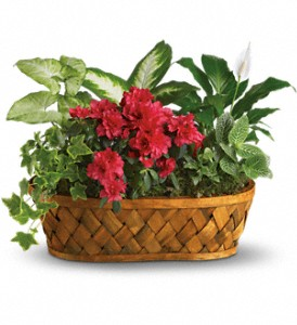 Plants Galore in Tuscaloosa AL, Pat's Florist & Gourmet Baskets, Inc.