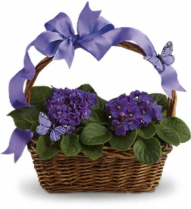 Violets And Butterflies in Mount Morris MI, June's Floral Company & Fruit Bouquets