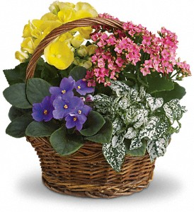 Spring Has Sprung Mixed Basket in Riverside CA, Mullens Flowers
