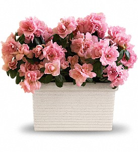 Sweet Azalea Delight in Muskogee OK, Basket Case Flowers From the Pharm