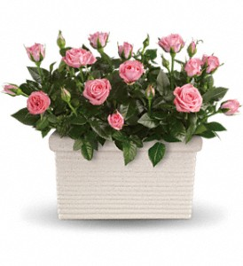 Rose Repose in Santa Claus IN, Evergreen Flowers & Decor