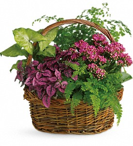 Secret Garden Basket in Santa Claus IN, Evergreen Flowers & Decor