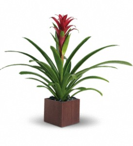 Teleflora's Bromeliad Beauty in Bellville TX, Ueckert Flower Shop Inc