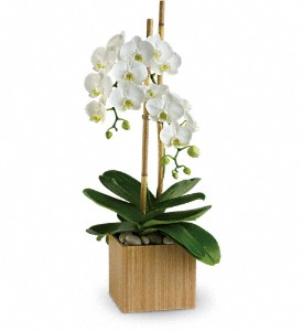 Teleflora's Opulent Orchids in flower shops MD, Flowers on Base