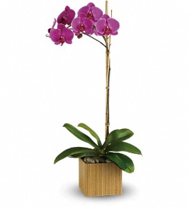 Teleflora's Imperial Purple Orchid in Santa Monica CA, Edelweiss Flower Boutique