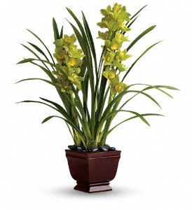 Teleflora's Splendid Orchids in Raleigh NC, North Raleigh Florist