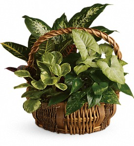Emerald Garden Basket in Rancho Cordova CA, Roses & Bows Florist Shop