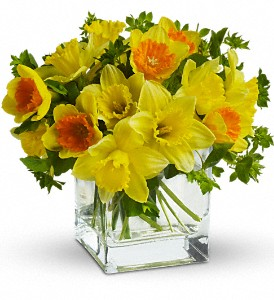 Teleflora's Daffodil Dreams in Columbia Falls MT, Glacier Wallflower & Gifts