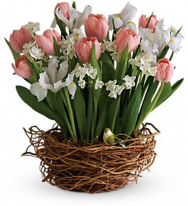 Tulip Song in Orwell OH, CinDee's Flowers and Gifts, LLC