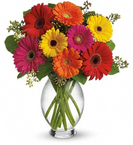 Teleflora's Gerbera Brights in Merced CA, A Blooming Affair Floral & Gifts