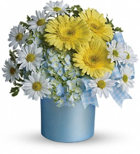 Teleflora's Once Upon a Daisy in Denver NC, Lake Norman Flowers & Gifts