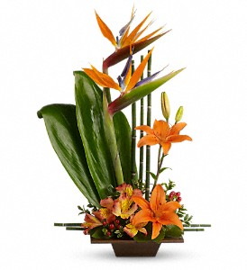 Teleflora's Exotic Grace in Austintown OH, Crystal Vase Florist