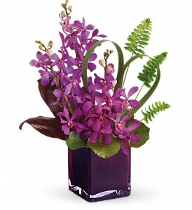 Teleflora's Island Princess in Waterbury CT, The Orchid Florist