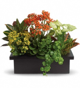 Stylish Plant Assortment in Oak Harbor OH, Wistinghausen Florist & Ghse.