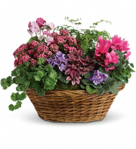 Simply Chic Mixed Plant Basket in Golden CO, Fleur-De-Lis Flowers