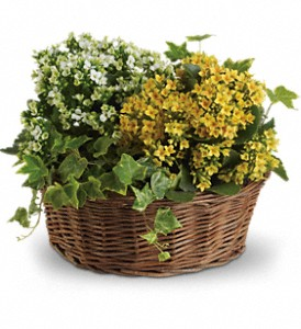 Basket of Joy in Albion NY, Homestead Wildflowers