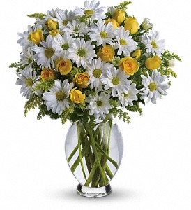 Teleflora's Amazing Daisy in Conesus NY, Julie's Floral and Gift