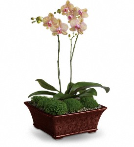Divine Orchid in Bluffton IN, Posy Pot