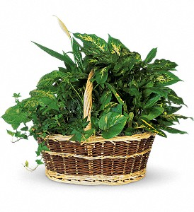 Large Basket Garden in Lake Worth FL, Lake Worth Villager Florist