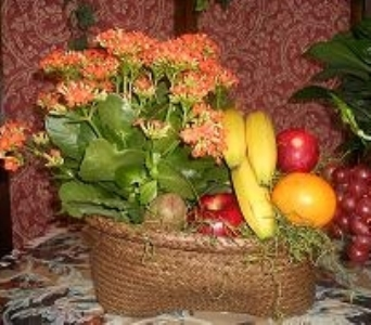 Fruit & Plant Basket in Mount Vernon OH, Williams Flower Shop