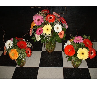 Gerbera Daisy Trio in Dallas TX, Z's Florist
