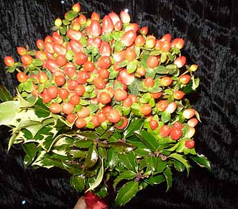 HOLLY BERRY BOUQUET in Hanover PA, Country Manor Florist
